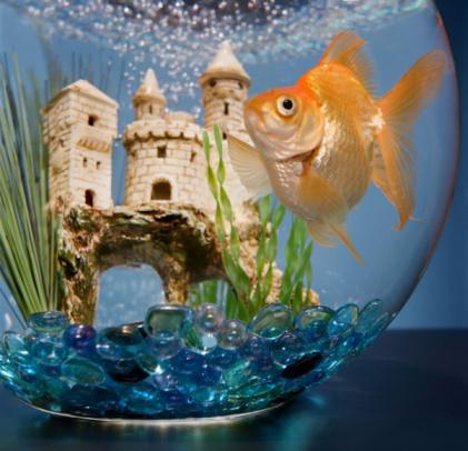 comment entretenir un aquarium conseils