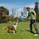 Bien éduquer son chien : 5 astuces pour éduquer son compagnon