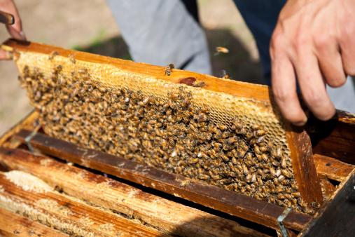 matériel d'apiculture
