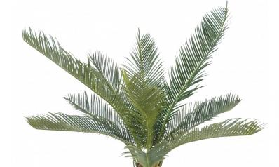 Déco : les plus beaux modèles de plantes artificielles