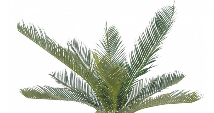 D co les plus beaux mod les de plantes artificielles for Ou trouver de belles plantes artificielles