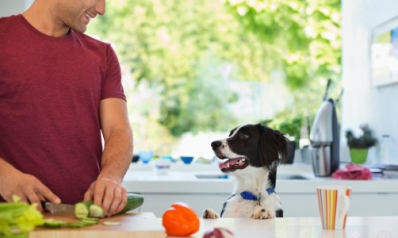 5 aliments à ne jamais donner à un chien
