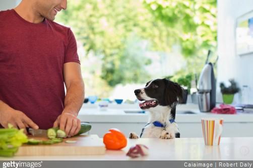 chien-nourriture