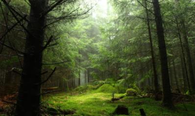 Acheter une forêt ? Oui, c'est une bonne idée d'investir dans le bois !
