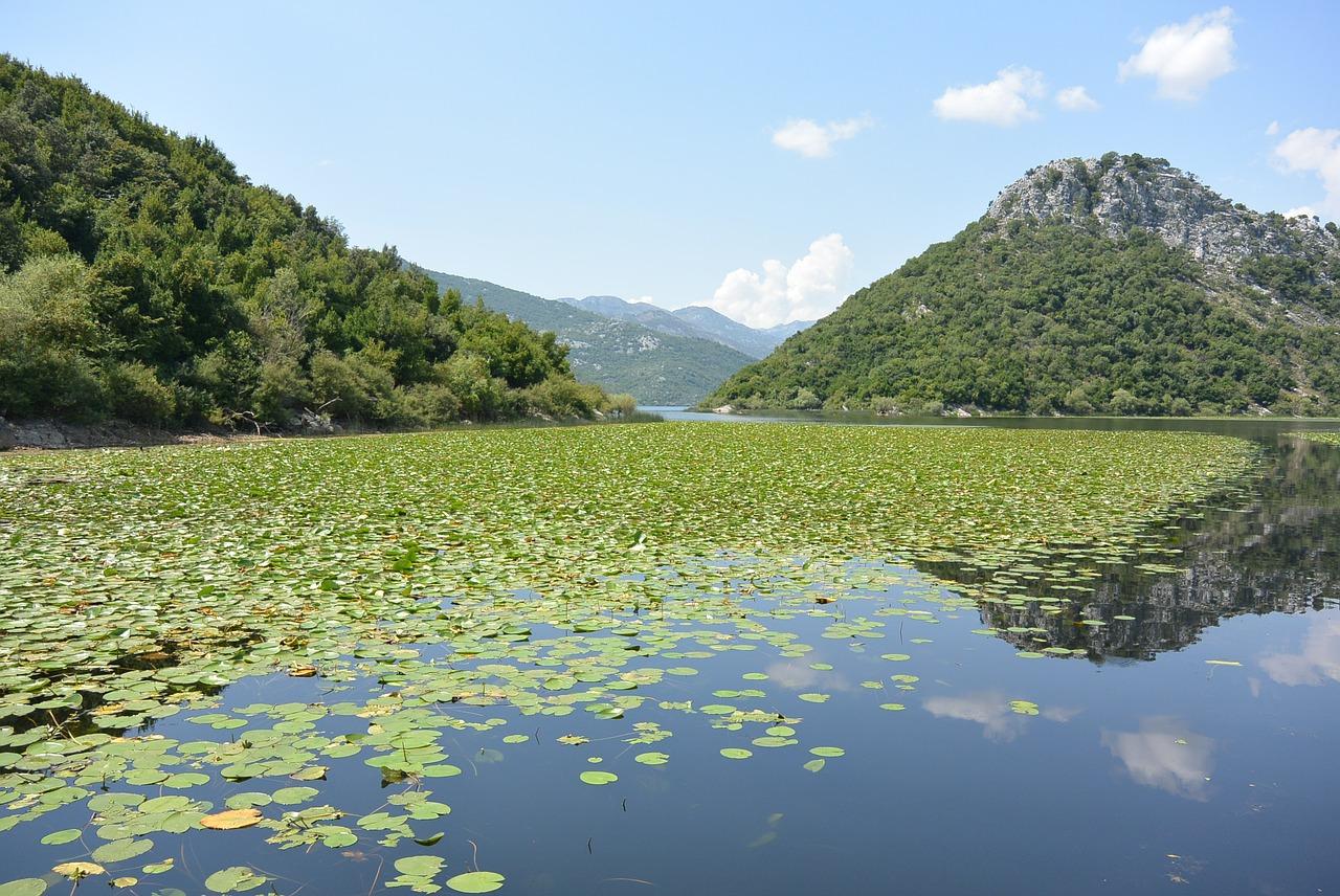 le lac de skadar montenegro