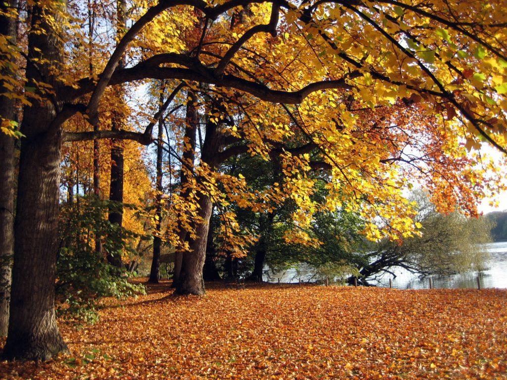 parc tete d-or automne lyon
