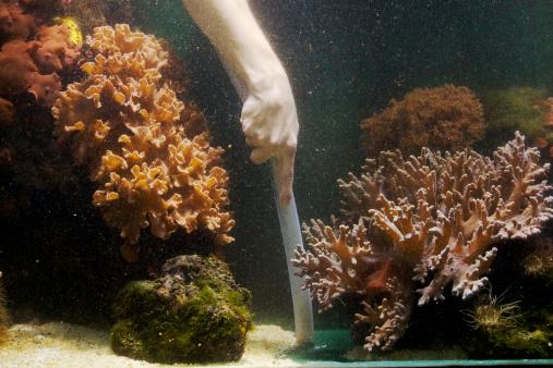 Nettoyage fond aquarium