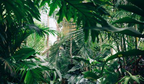 Maison décorée avec de nombreuses plantes vertes artificielles et naturelles