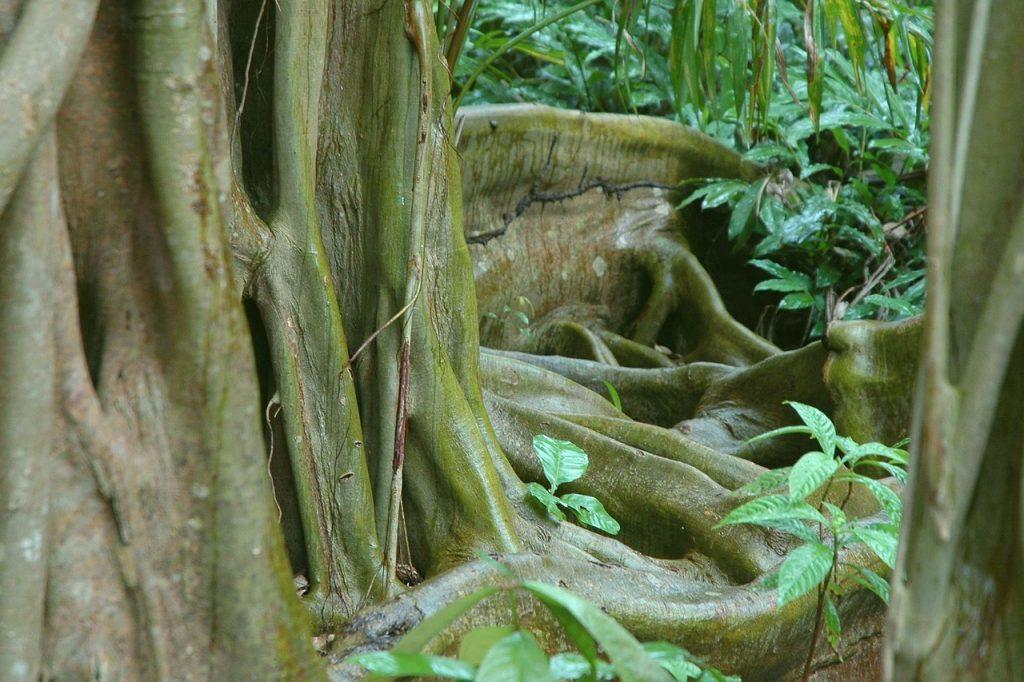 reserve naturelle belize